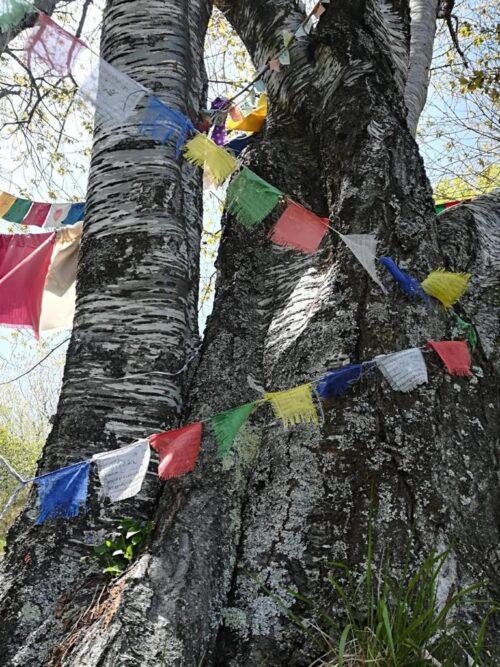 albero con gli occchi terzani valle dell'orsigna