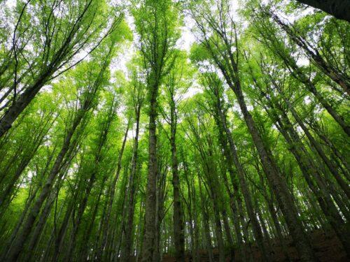 escursione foresta del teso escurione montagna pistoiese