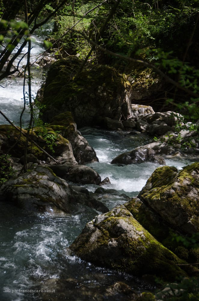 rio coccia