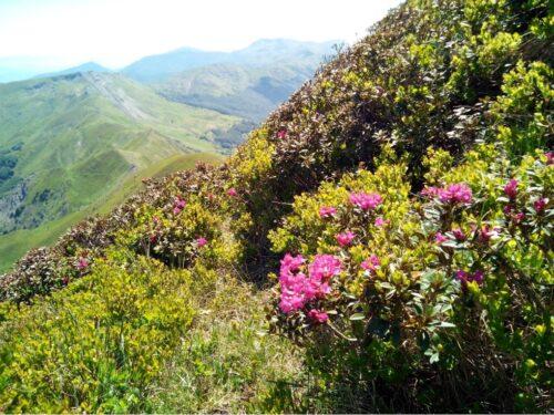 libro aperto rododendri escursioni abetone